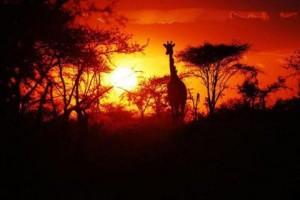 """""""lake manyara sunset view"""""""