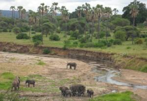 """The Tarangire River Elephants"""
