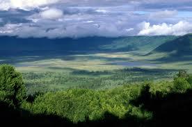 """The Ngorongoro crater floor"""