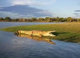 """""""The crocodile in rufiji river"""""""