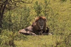 Ngongoro Crater Safari