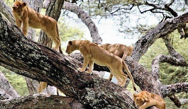 Northern Tanzania Safaris