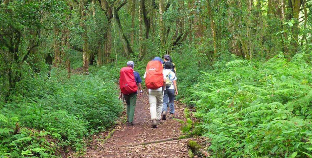 Kilimanjaro Climb Marangu