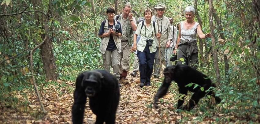 4 Days  – Chimpanzee Tracking Mahale