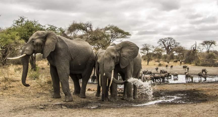 7 Days  – Northern Tanzania Safari
