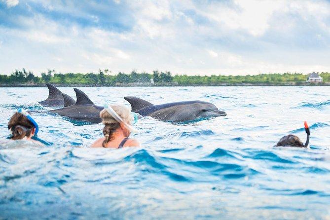 Dolphin Tour Zanzibar