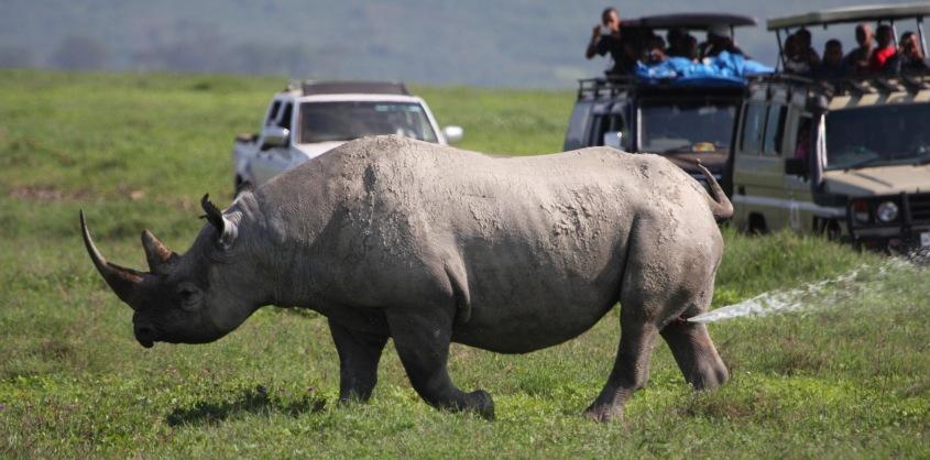2 Days Ngorongoro and Tarangire Budget Safari